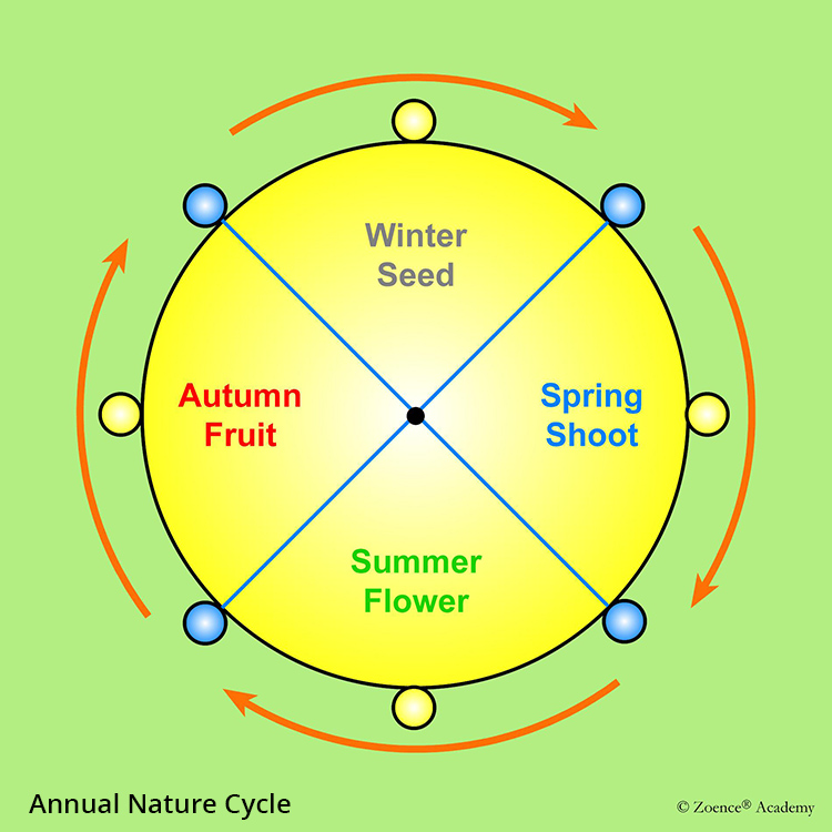 Annual Nature Cycle