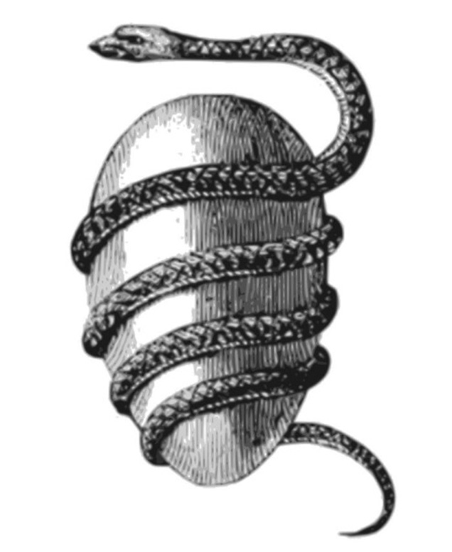 serpent and egg